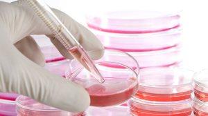 837229-stem-cells